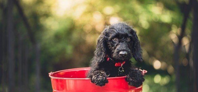 Brinquedos para cães: qual escolher?