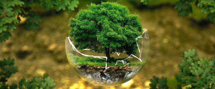 Os prós e contras de ser um consultor de meio ambiente verde